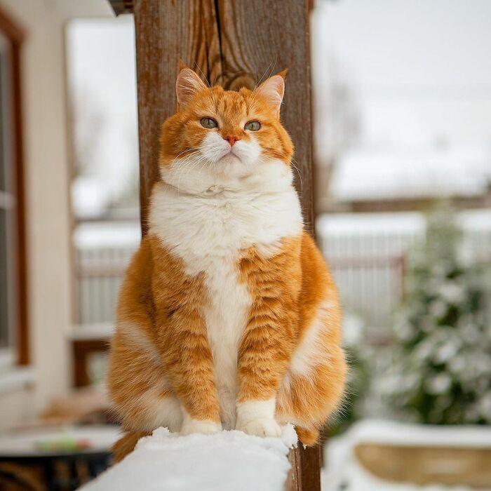 cute-ginger-cat-snow
