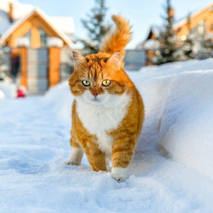 cute-ginger-cat-