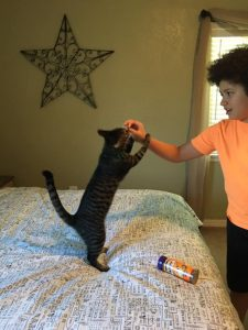 This 6th Grader Was Curious About How Many Surfaces Your Cat's Butt Touches At Home, So He Conducted An Experiment
