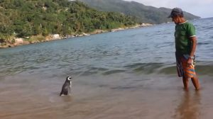 penguin and his friend