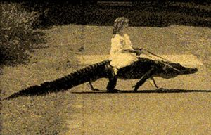 Why a horse when you got a croc?