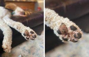 a paw inside a dogs paw