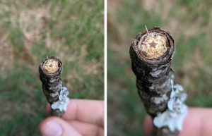 a star in the broken stick