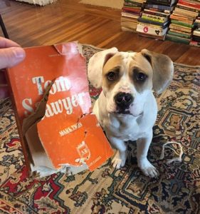 """Why did the dog destroy the book, """"Tom Sawyer"""" out of all the books."""