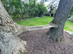 a bench formed by two trees