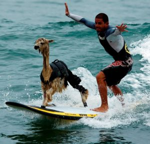 """""""We're all equal before a wave,"""" said by Laird Hamilton."""