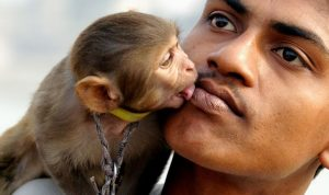 the pet monkey loves his owner