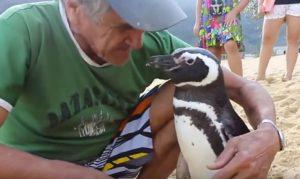 penguin meets his friend