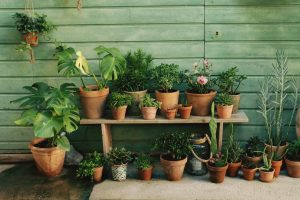 Potted-Plants-On-Shelf-Against-Wall