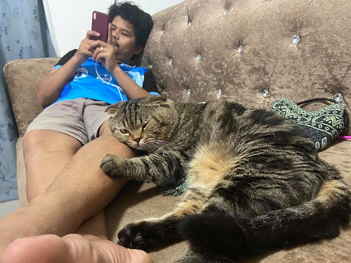 The Wife Has Documented How Her Cat Stole Her Husband From The Love Pictures.