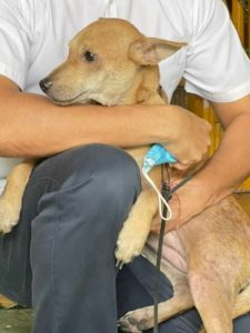 He-saved-his-human-family-from-a-fire-this-was-the-heroic-feat-of-a-dog-in-Malaysia
