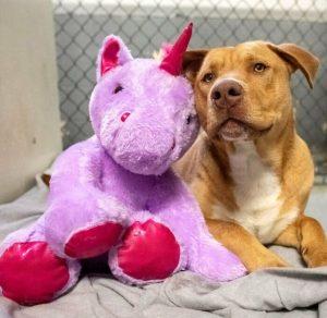 pitbull with unicorn