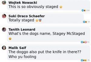 corgi comments