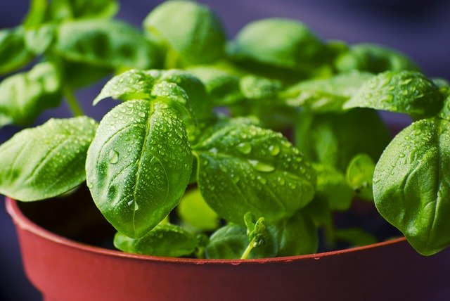 Plants That Will Radiate Positive Energy Inside of Your Home