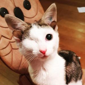 born with 4 ears and an eye deformity