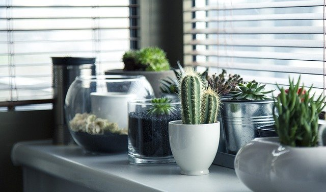 Cactus Many people doubt whether it is excellent to have a dessert plant in your home, but we can guarantee that it is perfect! Specialist, The plant expert advises keeping a desert plant in your home or office as it prevents negative energies from entering your space. Significantly, the Cactus acts as a natural shield to protect your space from pessimism and keeps your home safe and secure.