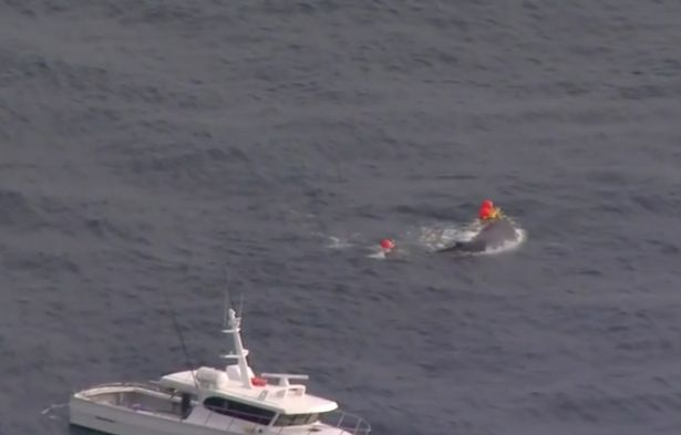 Rescuers rush to rescue a large humpback whale after being caught in a 200-meter-long net.