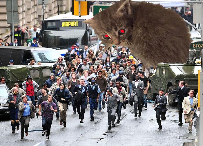 Hey Guys, Photoshop, This Kitten