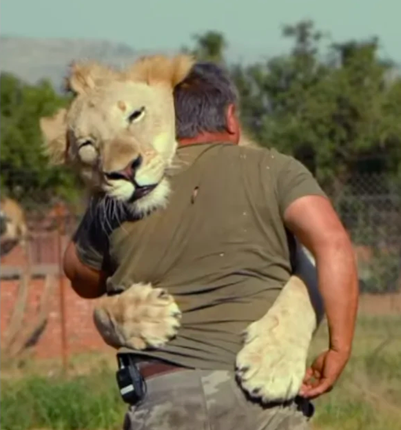 Meet The Man Who Spends His Time Cuddling Lions And Tigers Animals