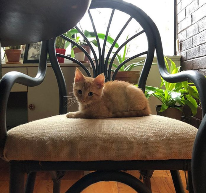 Meet Carrot The Anxiety Giving Cat