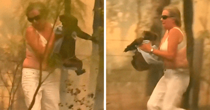 A brave Australian woman risks her life to save a burning and screaming Koala.