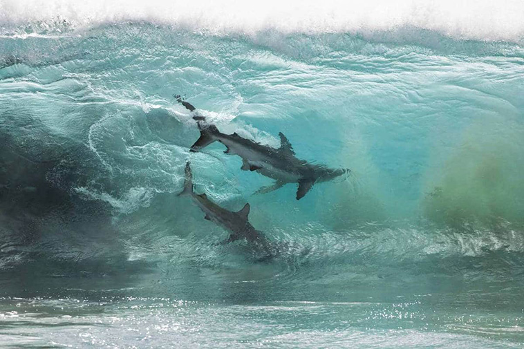 The Australian photographer caught the rare beauty of the sea.