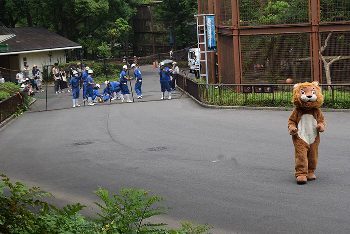Japanese Zoo Holds A Escaped Lion Drill