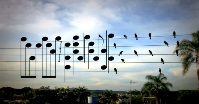 A man-made song using the location of a flock of birds sitting on the wires of music notes!