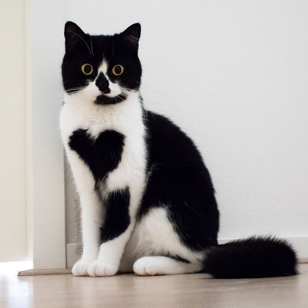 Zoe, The Cat With A Fur Heart On Her Chest