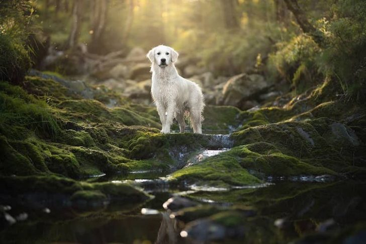 Unique Photos Of Dogs Posing In Mind-Blowing Landscapes